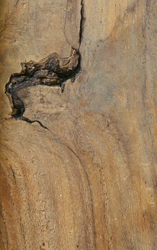 Free Wood Texture Royalty Free Stock Image - 28443946