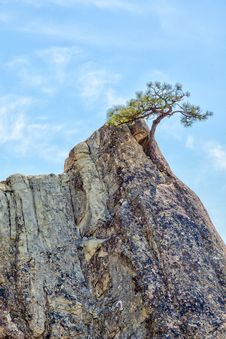 Free Lone Pine Tree In Sandstone Pinnacle Royalty Free Stock Photos - 28448418