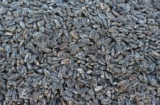 Free Sunflower Seeds Stock Images - 28449234