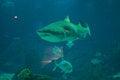 Free Marine Life - Shark Stock Photos - 28469863