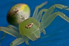Free Crab Spider Stock Photos - 28463043