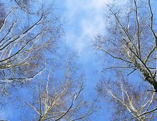 Free Winter In A Forest Royalty Free Stock Image - 28463306