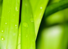 Free Water Drops On Fresh Green Leaves Royalty Free Stock Photo - 28468285