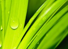 Free Water Drops On Fresh Green Leaves Royalty Free Stock Photography - 28468327