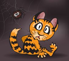 Free Ginger Cat And Spider Stock Photography - 28468452