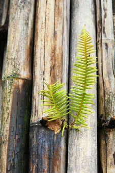 Free Young Plant And Decaying Bamboo Royalty Free Stock Photo - 28476545