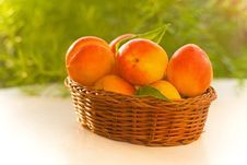 Free Fresh Apricot Stock Photography - 28476802