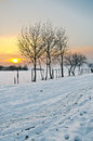 Free Trees At Sunset Royalty Free Stock Photography - 28480237