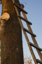 Free Ladder On A Tree Royalty Free Stock Photography - 28480807