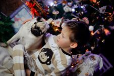 Free The Boy With A Pug Stock Photography - 28480442