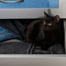 Free Black Kitten In The Open Drawer Stock Photos - 28484033