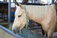 Free Horse With Blond Hair In Stable Stock Photos - 28484193