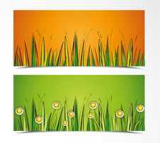 Free Grass Stock Image - 28485311