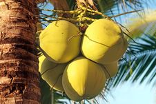 Free Coconuts Stock Photos - 28487043