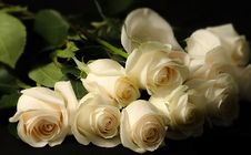 Free Dozen White Roses Stock Photos - 28487723