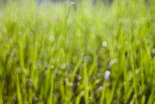 Bokeh Of The Rice Field Stock Images