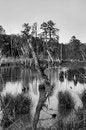 Free Scufflegrit Road Swamp Royalty Free Stock Image - 28490716