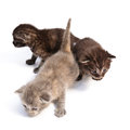 Free Little Kittens Royalty Free Stock Photos - 28495668