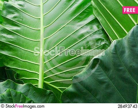 Free Power Of Green Stock Photos - 28493743