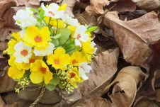 Free Yellow Flower And  Leaves Royalty Free Stock Photo - 28490155