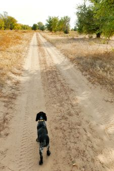 Free Dog At Sand Road In The Autumn Forest Stock Photography - 28496692