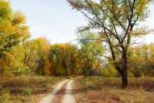 Free Sand Road In The Autumn Forest Stock Photos - 28496763