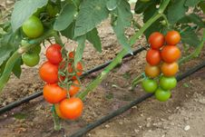 Free Organic Agriculture Royalty Free Stock Image - 28498516