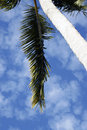 Free Palm Trees Royalty Free Stock Image - 2855566