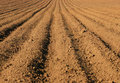 Free Ploughed Field Royalty Free Stock Photo - 2859045