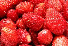 Free Wild Strawberry Royalty Free Stock Photo - 2850185