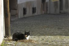 Cat In The City Stock Photography