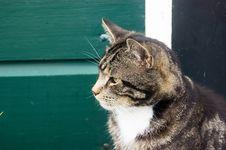 Free Farm Cat Stock Photography - 2851242