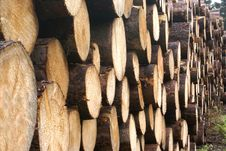 Free Lot S Of Wood. Stock Images - 2853194