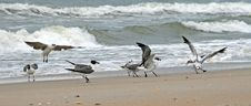 Free Sea Gulls Stock Images - 2853534