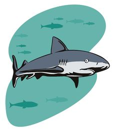 Free Great White Shark Royalty Free Stock Images - 2853549
