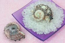 Free Sea Salt And Two Seashells Royalty Free Stock Photography - 2854457