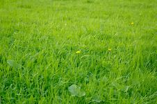 Free Grass Royalty Free Stock Images - 2854979