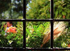 Free Windows Green Royalty Free Stock Photography - 2855837