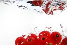 Free Redcurrant Stock Images - 2856424