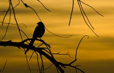Free Bird Silhouette Royalty Free Stock Images - 28505329