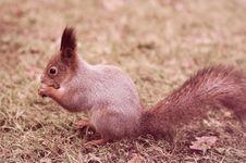 Free Squirrel Stock Images - 28505824