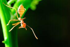 Free Ant Royalty Free Stock Image - 28509596