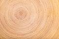 Free Bamboo Texture Stock Photos - 28511253