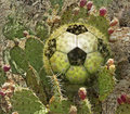 Free Cactus Soccer Ball Royalty Free Stock Photo - 28514415