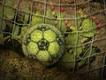 Free Cactus Soccer Ball Royalty Free Stock Images - 28514439