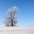 Free Alone Tree Stock Photography - 28519762