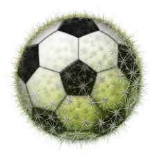 Free Cactus Soccer Ball Stock Photo - 28514520