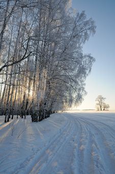 Free Winter Forest Stock Photo - 28519690