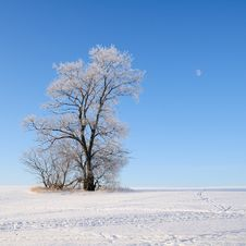 Free Alone Tree Stock Photography - 28519762