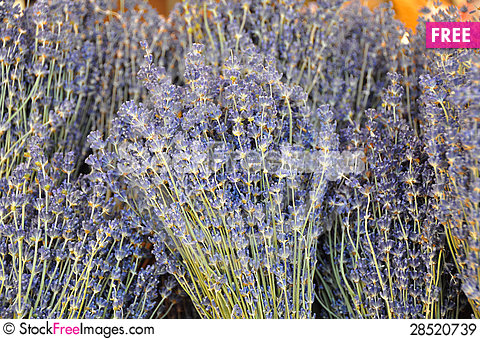 Free Lavender Of Provence - France Royalty Free Stock Images - 28520739